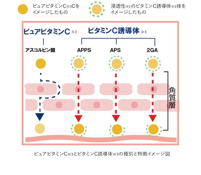 ピュアビタミンCとビタミンC誘導体の種別と特徴イメージ